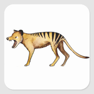 Tasmanian tiger, Thylacine Square Sticker