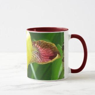 Tasse ensoleillée d'iris dans beaucoup d'options