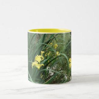 Tasse jaune d'iris de l'eau