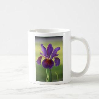 Tasse pourpre extraordinaire d'iris