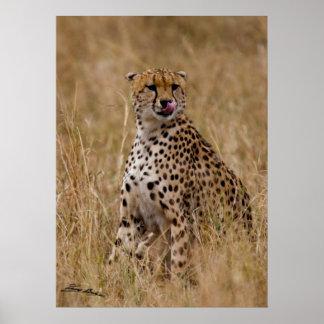 Tasty Lip Cheetah Poster