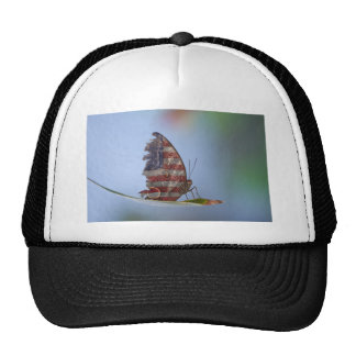 Tattered American Butterfly Hats