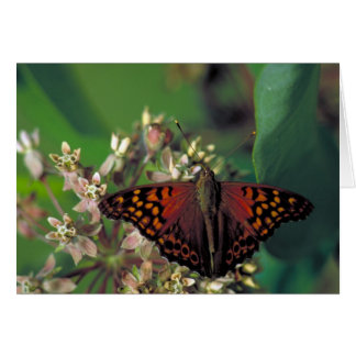 Tawny Emperor Butterfly on Common Milkweed Card