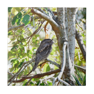 TAWNY FOGMOUTH RURAL QUEENSLAND AUSTRALIA TILE