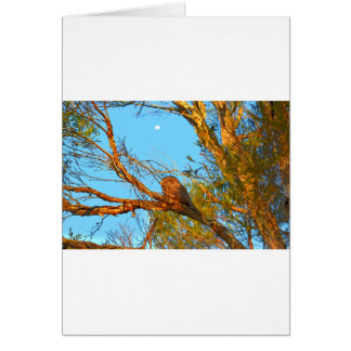 TAWNY FROGMOUTH ART QUEENSLAND AUSTRALIA CARD