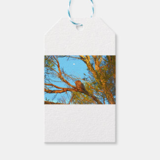 TAWNY FROGMOUTH ART QUEENSLAND AUSTRALIA GIFT TAGS
