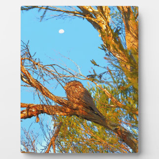TAWNY FROGMOUTH ART QUEENSLAND AUSTRALIA PLAQUE