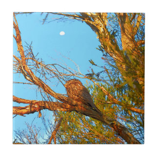 TAWNY FROGMOUTH ART QUEENSLAND AUSTRALIA TILE