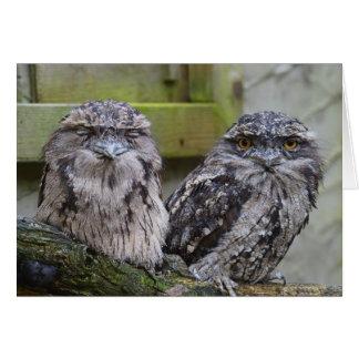 Tawny Frogmouth Birds Card