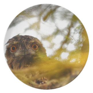 TAWNY FROGMOUTH OWL QUEENSLAND AUSTRALIA DINNER PLATE
