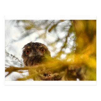 TAWNY FROGMOUTH OWL QUEENSLAND AUSTRALIA POSTCARD