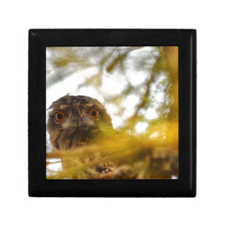 TAWNY FROGMOUTH OWL QUEENSLAND AUSTRALIA TRINKET BOXES