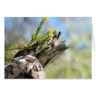 TAWNY FROGMOUTH OWL RURAL QUEENSLAND AUSTRALIA CARD