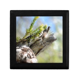 TAWNY FROGMOUTH OWL RURAL QUEENSLAND AUSTRALIA KEEPSAKE BOX