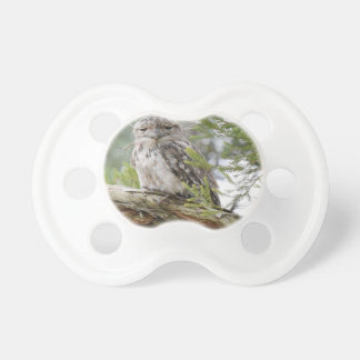 TAWNY FROGMOUTH OWL RURAL QUEENSLAND AUSTRALIA PACIFIERS