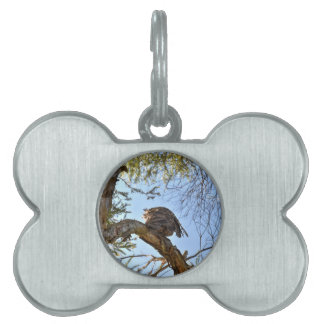 TAWNY FROGMOUTH OWL RURAL QUEENSLAND AUSTRALIA PET ID TAGS