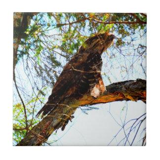 TAWNY FROGMOUTH OWL RURAL QUEENSLAND AUSTRALIA TILE