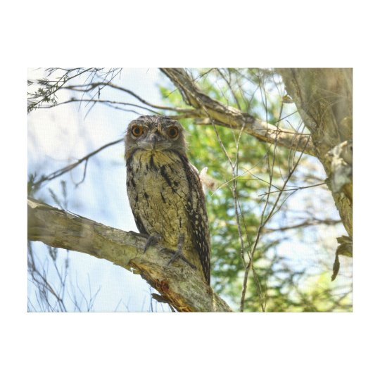 TAWNY FROGMOUTH QUEENSLAND AUSTRALIA CANVAS PRINT
