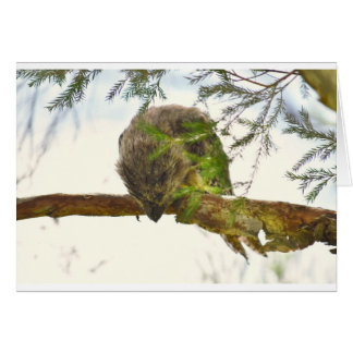 TAWNY FROGMOUTH QUEENSLAND AUSTRALIA CARD