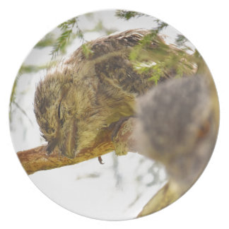TAWNY FROGMOUTH QUEENSLAND AUSTRALIA DINNER PLATES