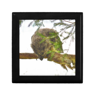 TAWNY FROGMOUTH QUEENSLAND AUSTRALIA GIFT BOX