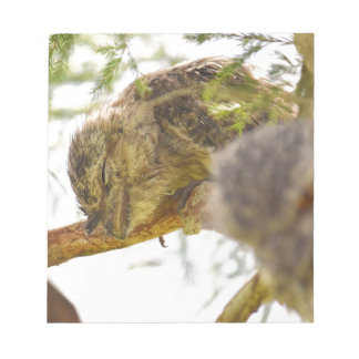 TAWNY FROGMOUTH QUEENSLAND AUSTRALIA NOTEPAD