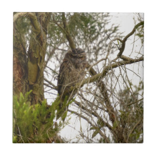 TAWNY FROGMOUTH QUEENSLAND AUSTRALIA TILE