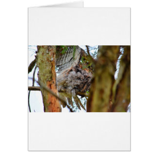 TAWNY FROGMOUTH RURAL QUEENSLAND AUSTRALIA CARD