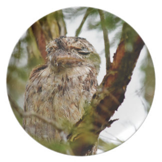 TAWNY FROGMOUTH RURAL QUEENSLAND AUSTRALIA DINNER PLATE