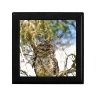 TAWNY FROGMOUTH RURAL QUEENSLAND AUSTRALIA GIFT BOXES