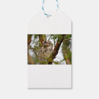 TAWNY FROGMOUTH RURAL QUEENSLAND AUSTRALIA GIFT TAGS