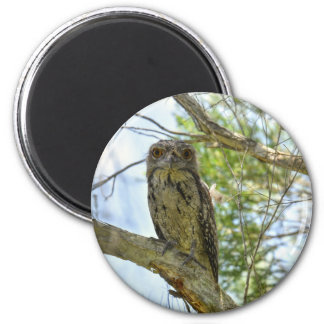 TAWNY FROGMOUTH RURAL QUEENSLAND AUSTRALIA MAGNET