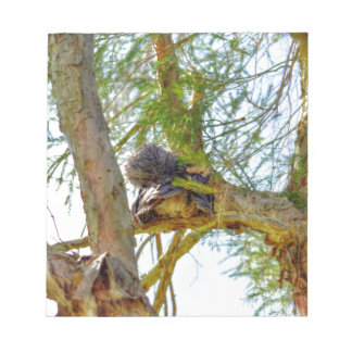 TAWNY FROGMOUTH RURAL QUEENSLAND AUSTRALIA NOTEPAD