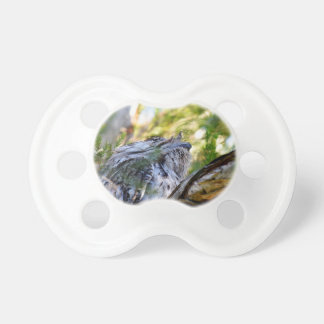 TAWNY FROGMOUTH RURAL QUEENSLAND AUSTRALIA PACIFIERS