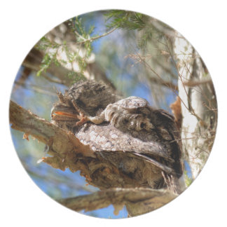 TAWNY FROGMOUTH RURAL QUEENSLAND AUSTRALIA PLATE