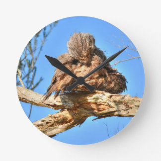 TAWNY FROGMOUTH RURAL QUEENSLAND AUSTRALIA ROUND CLOCK