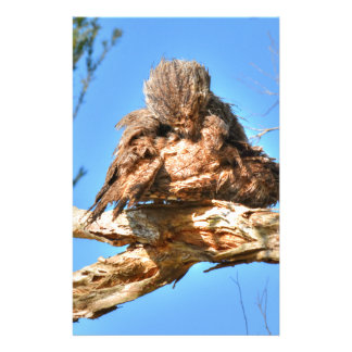 TAWNY FROGMOUTH RURAL QUEENSLAND AUSTRALIA STATIONERY