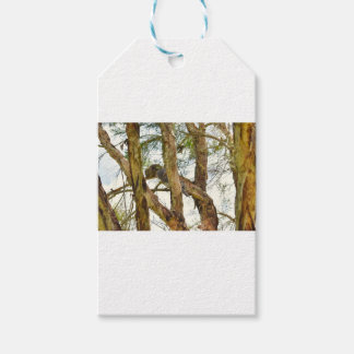 TAWNY FROGMOUTHS QUEENSLAND AUSTRALIA GIFT TAGS