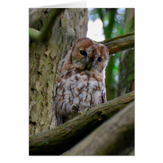Tawny owl blank greeting card