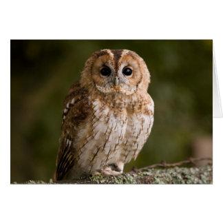 Tawny Owl Card