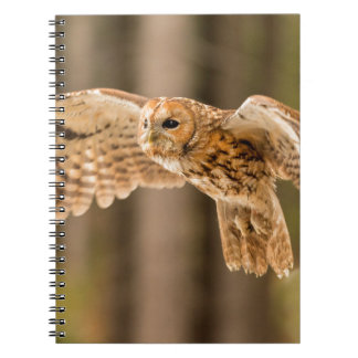 Tawny Owl in flight. Notebook