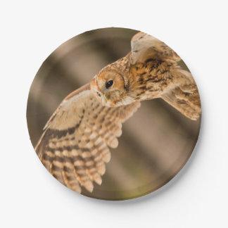 Tawny Owl in flight. Paper Plate