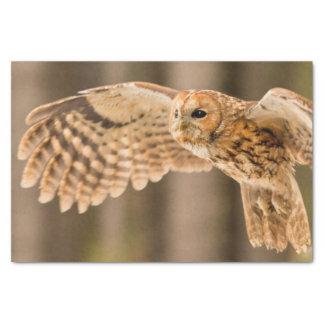 Tawny Owl in flight. Tissue Paper