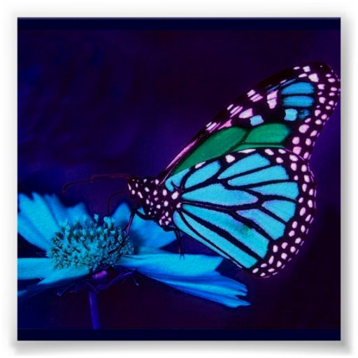 - TBA - Butterfly in Blue Light Poster