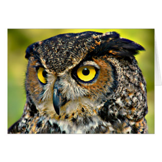 TCWC - Great Horned Owl Blank Card