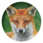 TCWC - Red Fox Watercolor Painting Plate