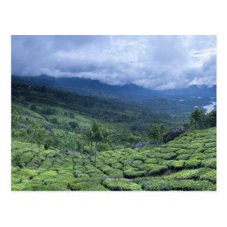 Tea plantation 2 Kerala state India Postcard