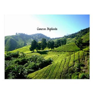 Tea Plantation, Cameron Highlands, Malaysia Postcard