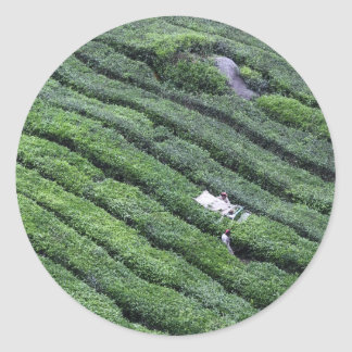 Tea plantation Cameron Highlands Round Sticker