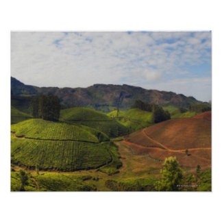 Tea Plantation Kerala state India Poster